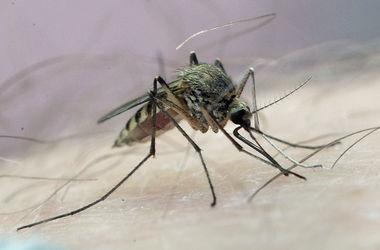 Волдыри на коже как при укусе комара